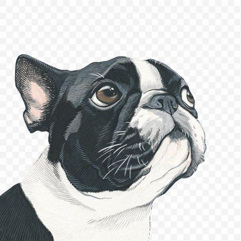 Dog Dog Portrait Painting Art Illustration Png Dog Art Artist Boston Terrier Bulldog Boston Terrier Art Boston Terrier Illustration Dog Portraits