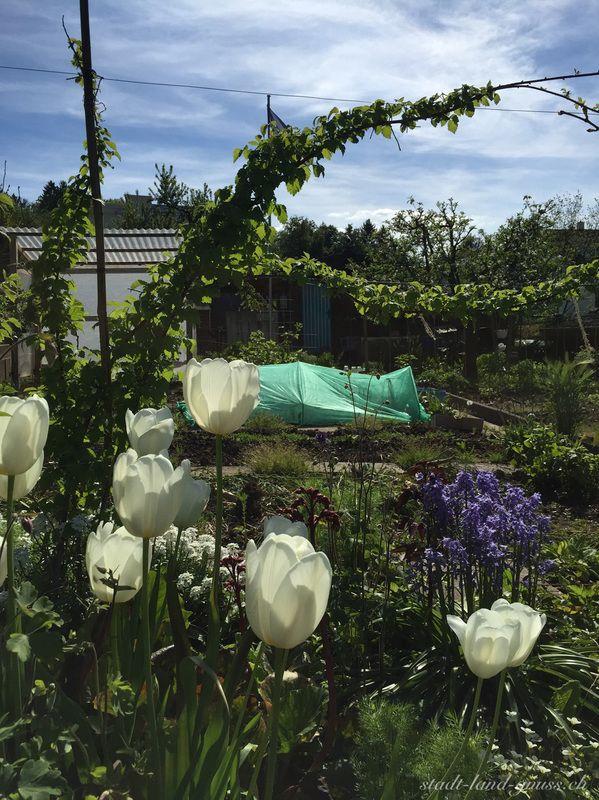 Schrebergarten im Mai 2016 Garten Tipps und Erfahrungen