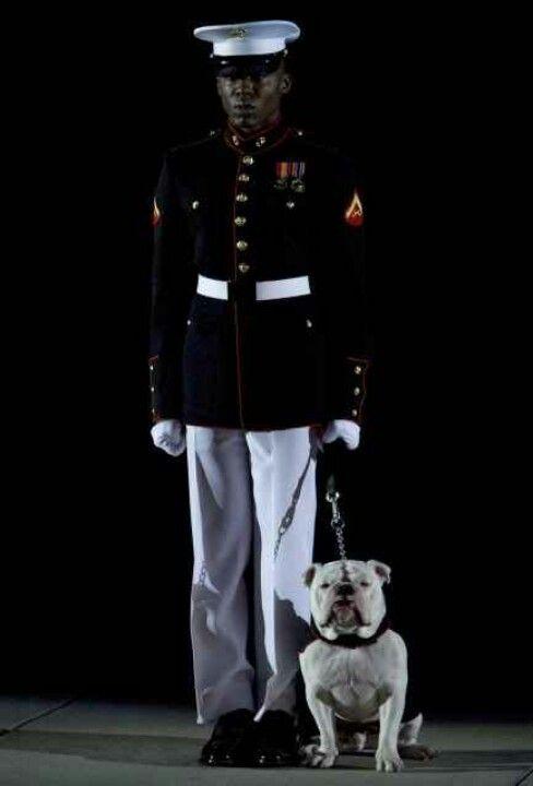 Marine Corps Mascot Bulldog In Dress Blues Bulldog Military
