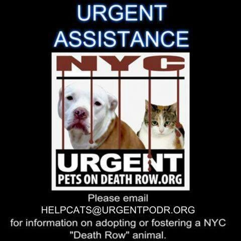 #AnimalWelfare : URGENT CAT HELP DESK PLEASE NOTE OUR NEW... http://ift.tt/2qt3QHH