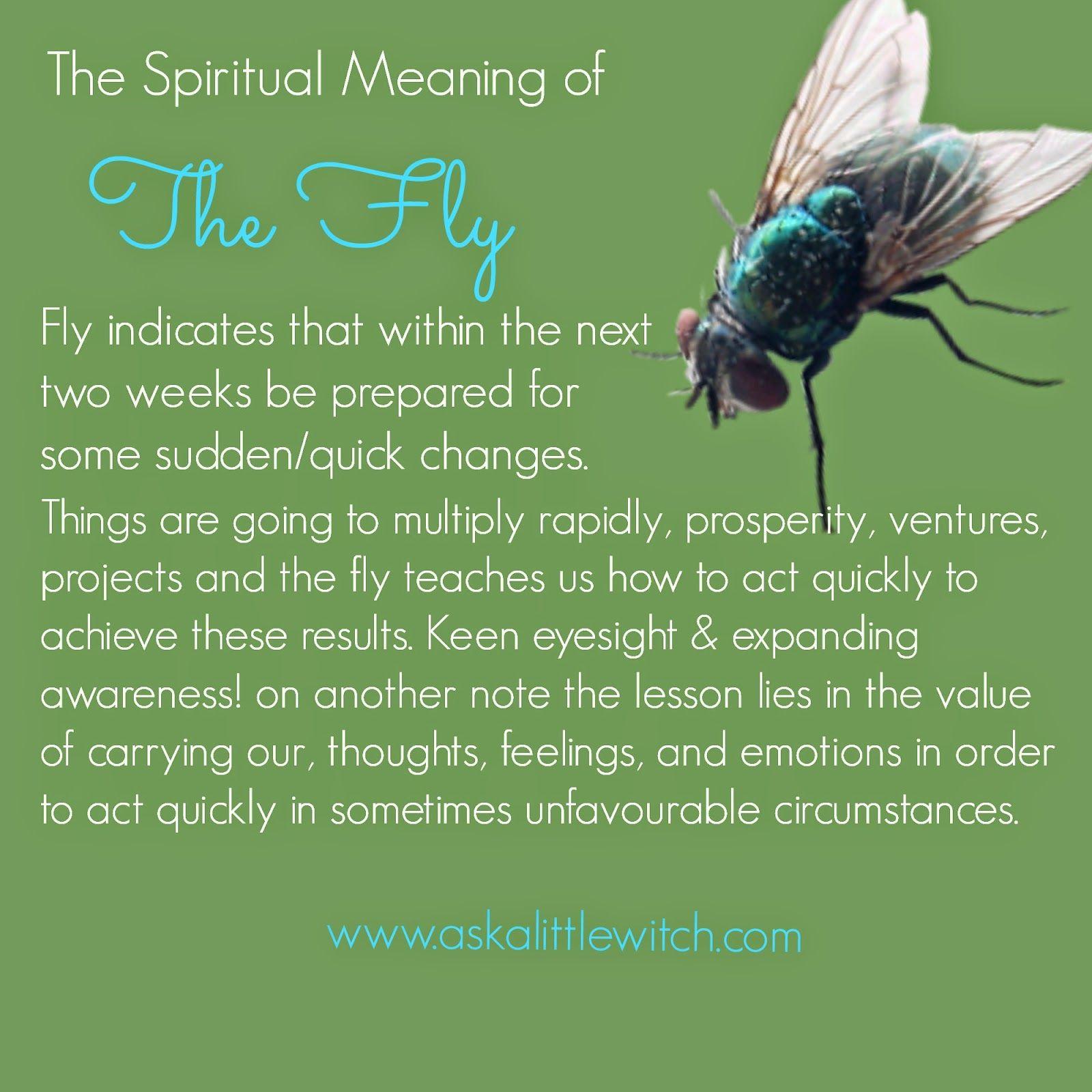 Fly Symbolism Google Search Fly Symbolism Spirit Animal