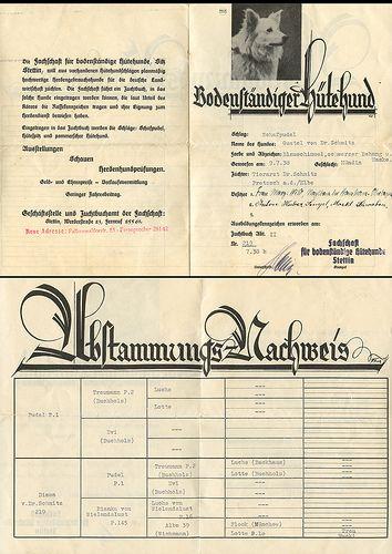 Bodenständiger Hütenhund Schlag Schafpudel Nachweis der Abstammung Szczecin Stettin