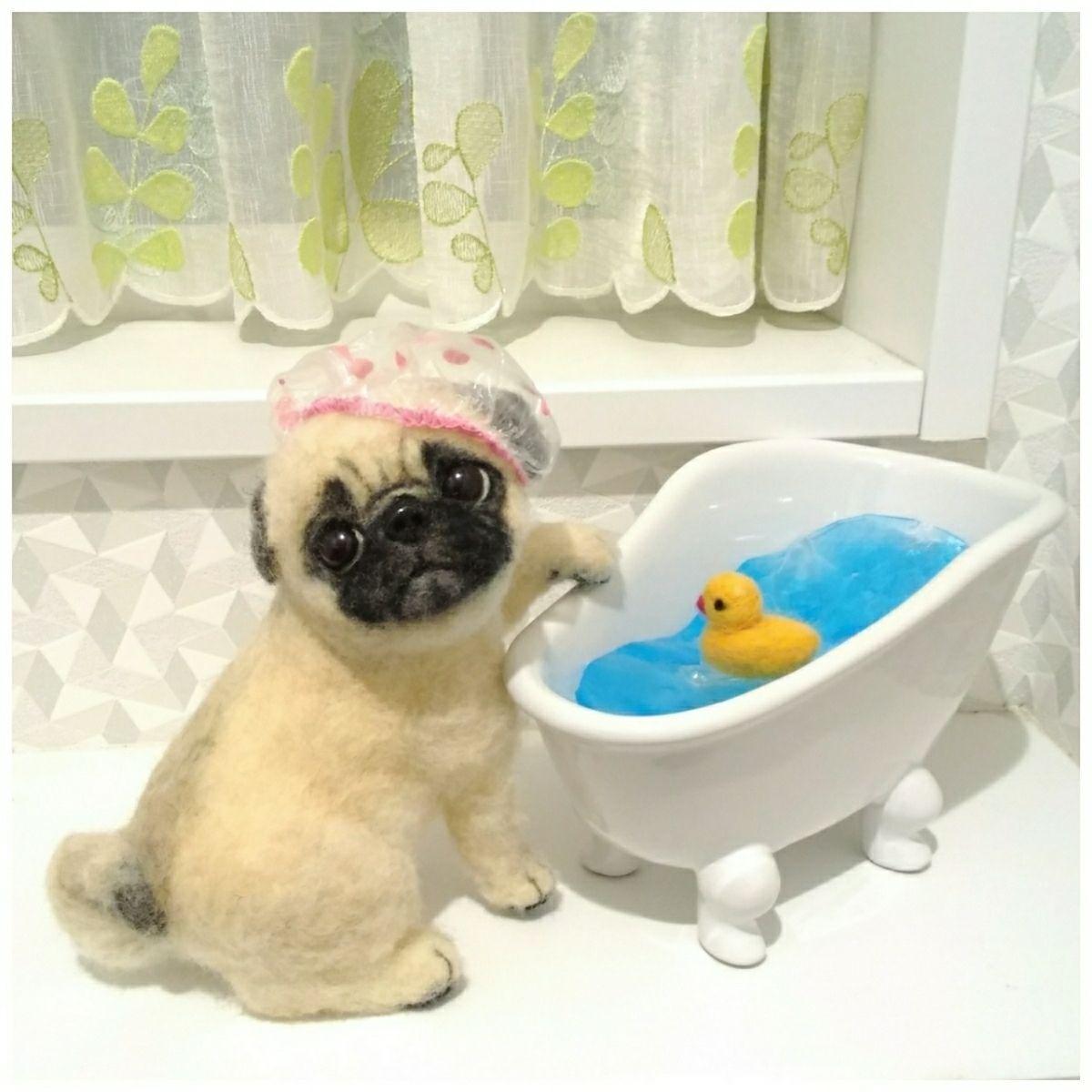 振り返るパグちゃん お風呂タイム グンテ わたわたペット 沢山の中から ご覧くださり本当にありがとうございますm M優しいお母さんが あたたかいお湯をはった湯船にアヒルのおもちゃを浮かべてあげました シャンプーハットをかぶったパグちゃんは お風呂タイム