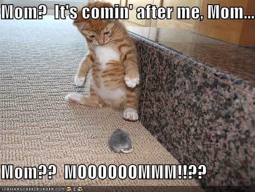 Mom? It's comin' after me, Mom... Mom?? MOOOOOOMMM!!?? #funnykittens