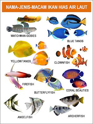 Gambar Foto Jenis Macam Nama Ikan Hias Air Laut Freewaremini Ikan Air Tawar Ikan Air Tawar