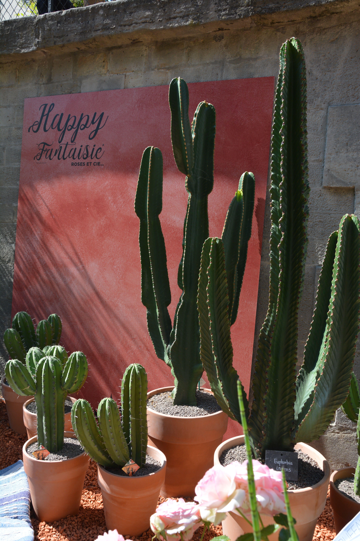 Un Incroyable Jardin De Cactus Dans Le Desert Americain Plantes