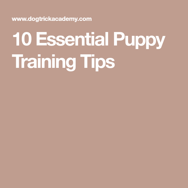 10 Essential Puppy Training Tips