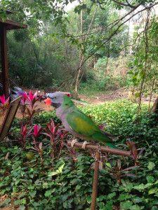 Hainan, China. Local bird park between Haikou and Sanya. It's beautiful!!!