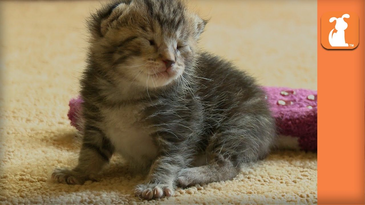 Helpless 8 Day Old Kitten Rescued From High Kill Shelter Kitten Rescue Kitten Happy Cat