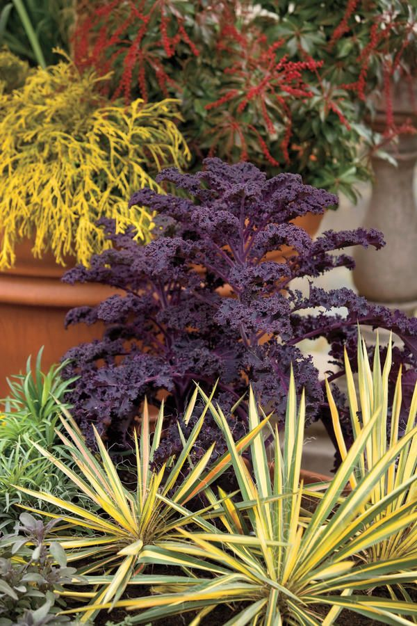 10 Best Plants For Fall Winter Container Gardening Winter
