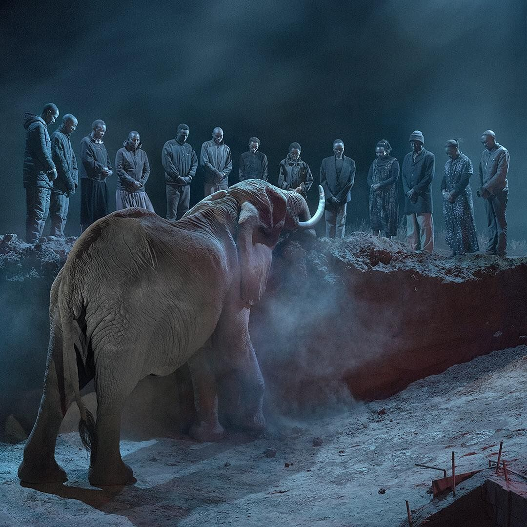 762 Likes 54 Comments Nick Brandt Nickbrandtphotography On Instagram The Gathering From This Empty World Swipe For S Nick Brandt Pet Portraits Photo