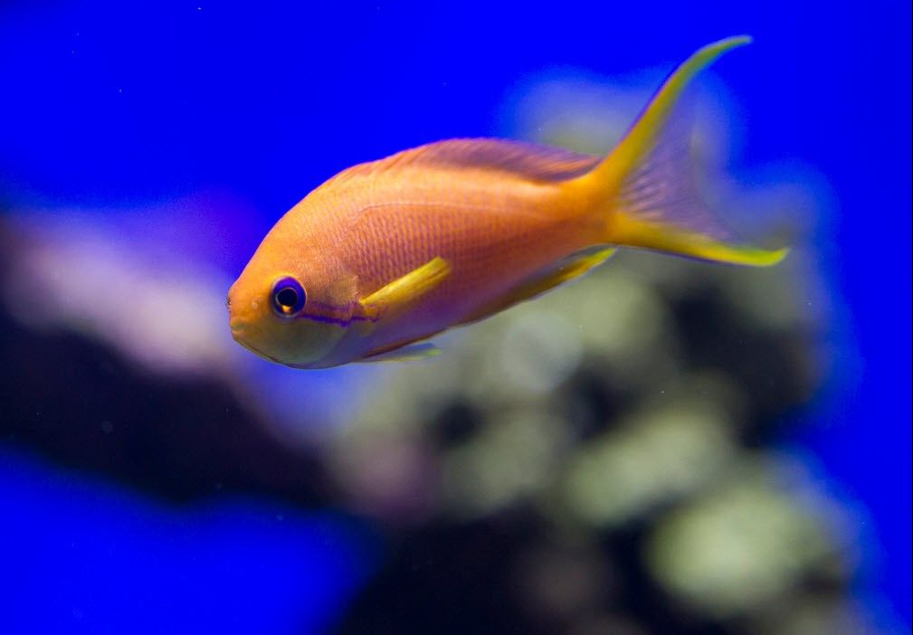 Top 10 Most Beautiful Fishes In The World Color