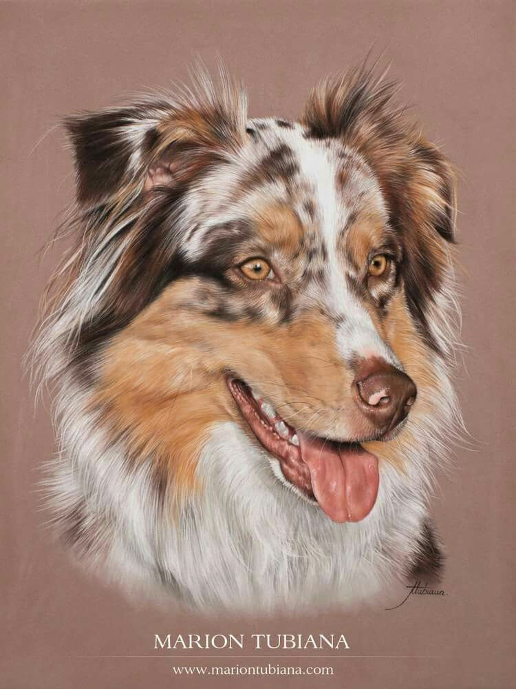 Marion Tubiana Dog Portraits Art Pet Portraiture Animal