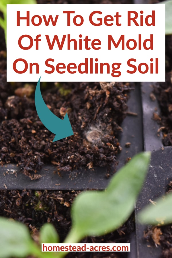 How To Get Rid Of White Mold On Seed Starting Soil In 2021 Seed Starting Soil Growing Seedlings Seedlings Indoors Starting