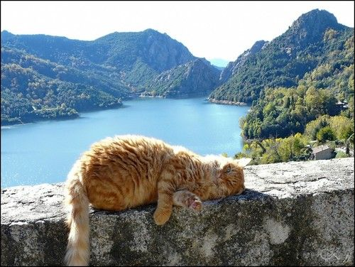 village cats of France | Tolla, Southern Corsica, Corsica, France - City, Town and Village of ...