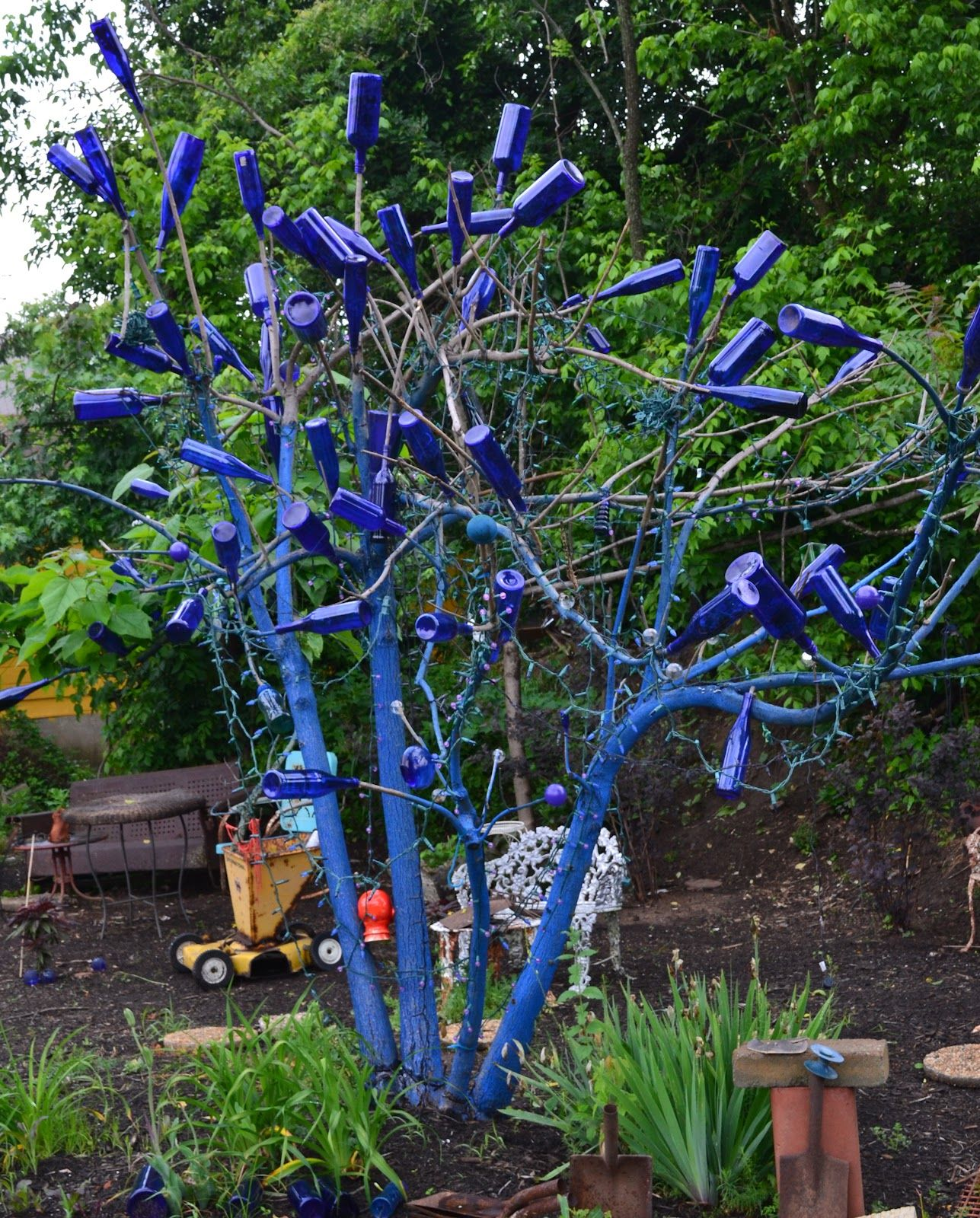 Growing Days...blue Bottle Tree