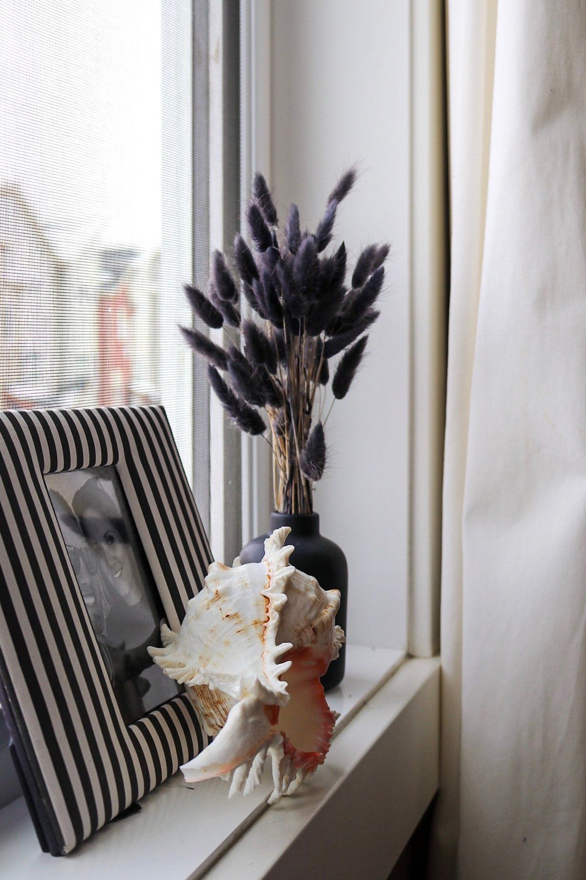 BUNNY TAILS Charcoal Black | Pampas grass, Bunny tail, Dried floral