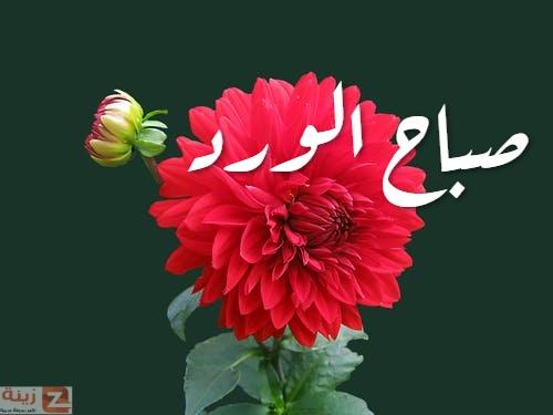 صور صباح الحب والاشتياق صباح الحب والشوق صباح الحب حبيبتي Zina Blog Plants