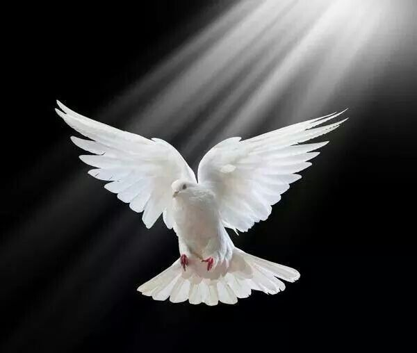 D I V I N E All We Speak Come From The Heart And Eyes The Truth Will Speak Like Unspoken Words And Build Our Char White Doves Dove Images Dove Pictures