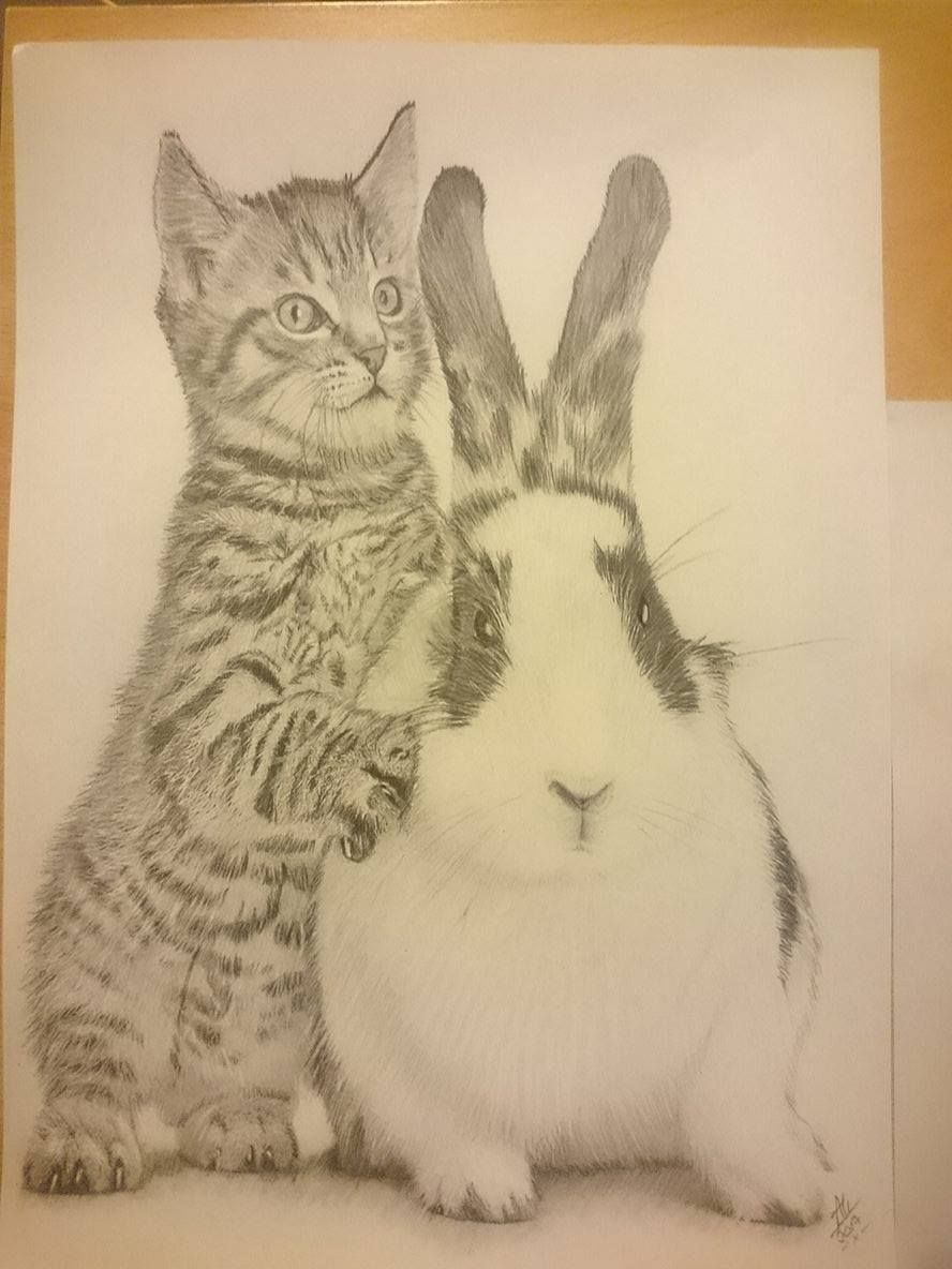 Kitten and Rabbit Available for sale Sketch only £20 Framed in A4 ...