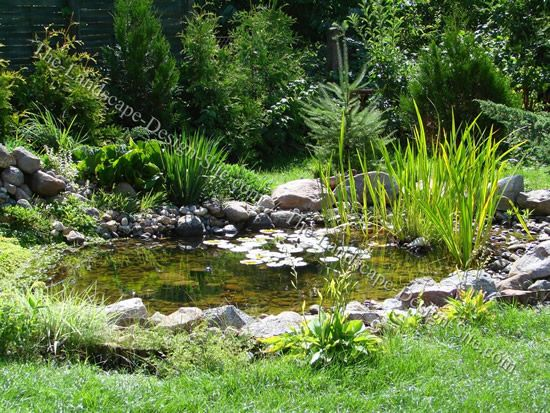 Backyard garden pond lined with natural stone and plants for Natural pond plants