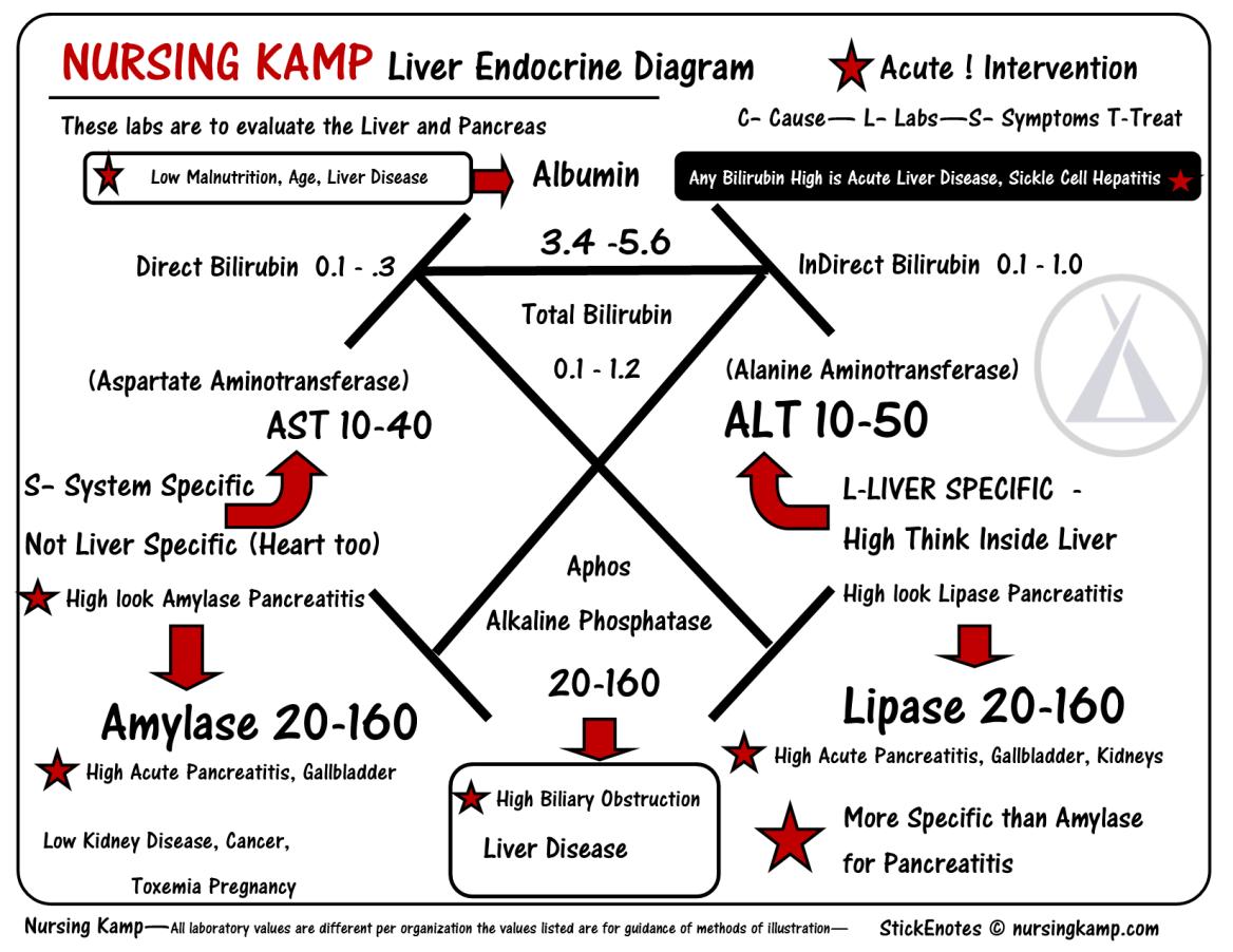 Liver Endocrine Diagram Laboratory Pinterest Nursing Labs