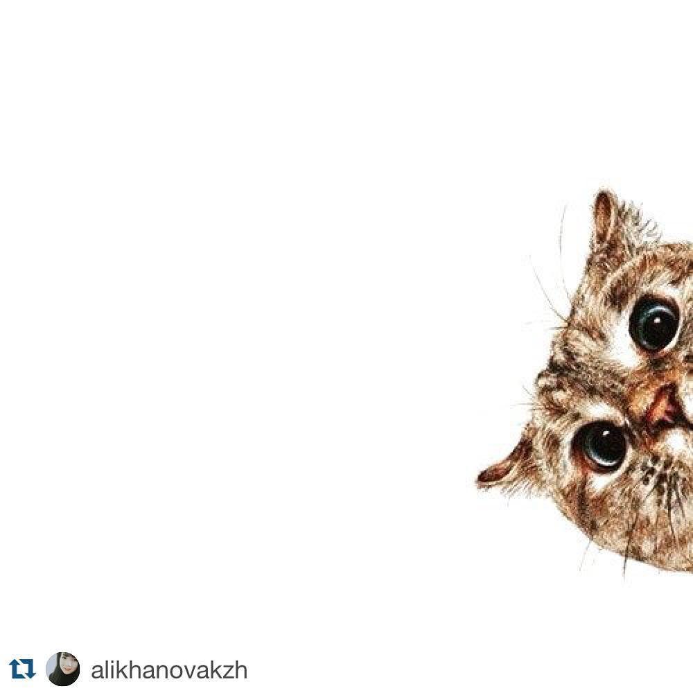 #Repost @alikhanovakzh  Hello #tagsforlikes#like4like#follow4follow#instagram#instapic#instagood#instacat#cat#happiness#고양이#인스타그램#인스타데일리#아녕#고양이스타그램#인스타굿