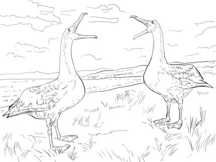 Albatross Mating Dance Coloring Page Supercoloring Com Dance Coloring Pages Coloring Pages Free Printable Coloring Pages
