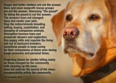 Poems And Saying Of Comfort Foster Dog Poem Stories Of