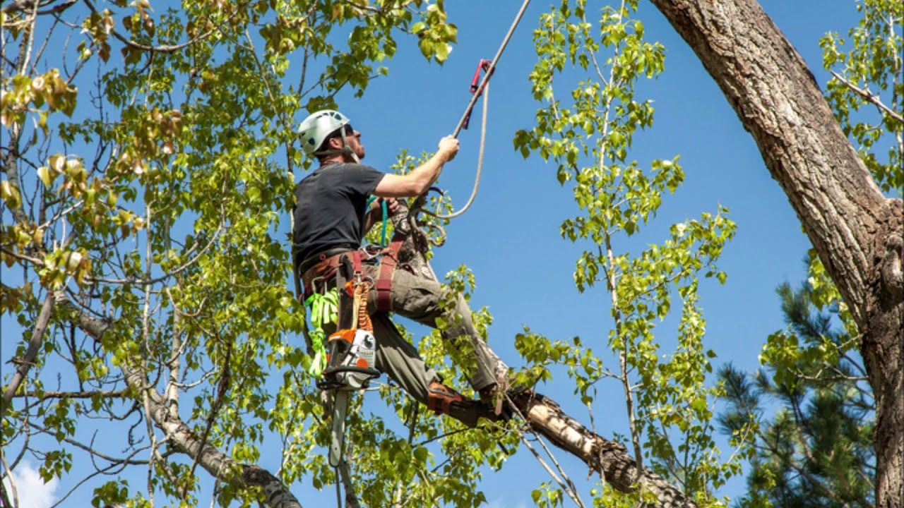 Tree Care Service near Omaha Nebraska Omaha Junk