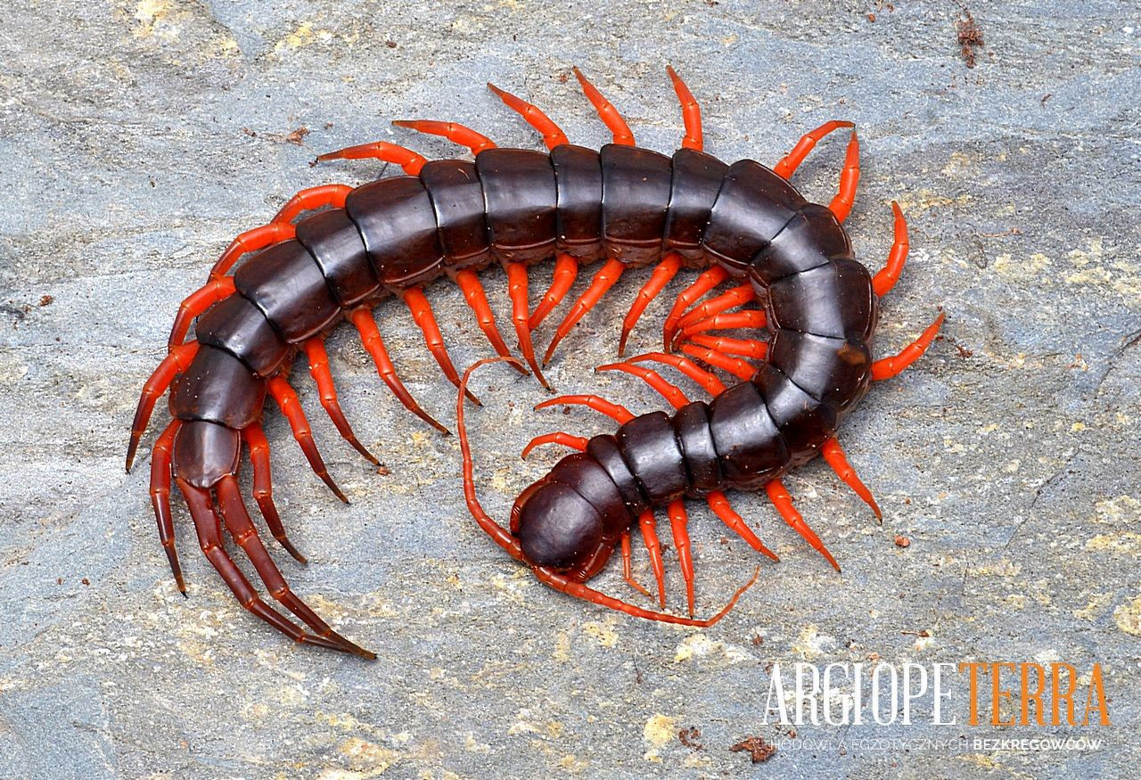 how to get rid of millipedes naturally
