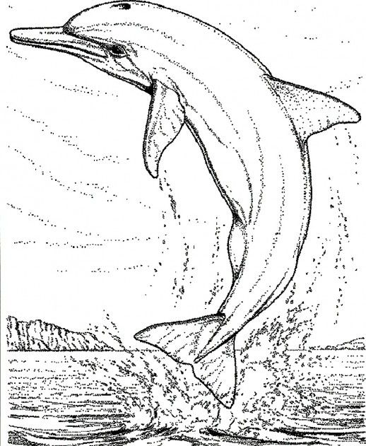 A Dolphin Jumping To The Air From Sea Coloring Pages