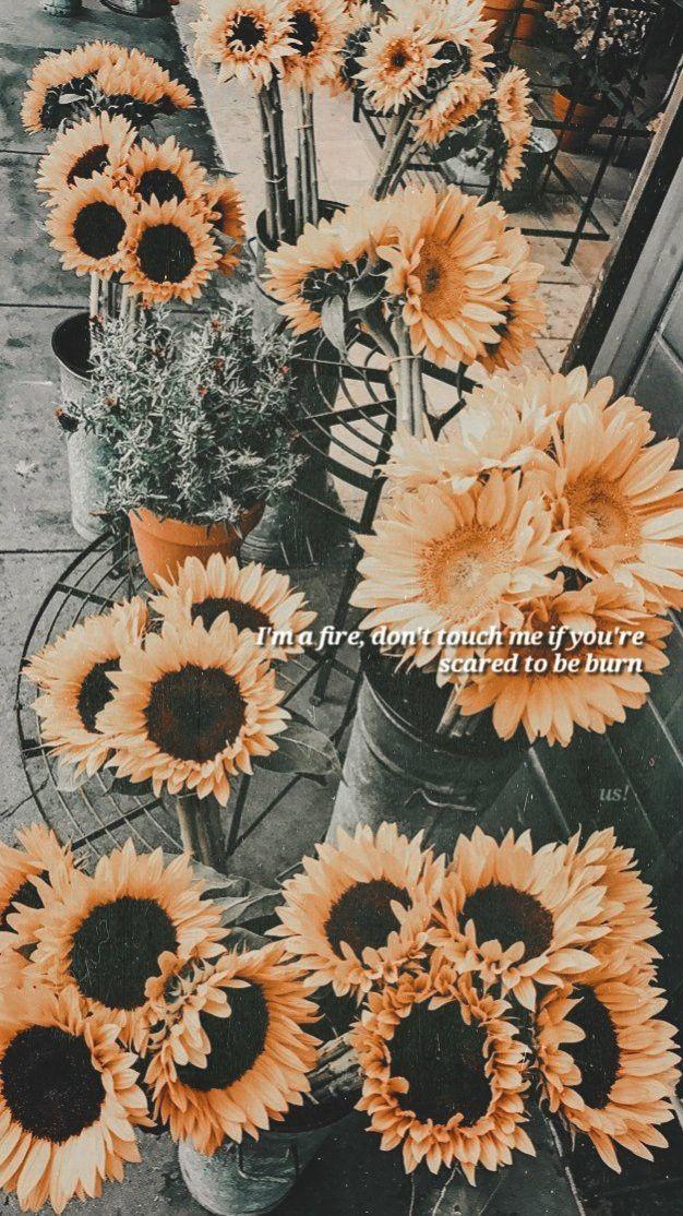 Pin By Aashna Aggarwals On Lockscreen Sagittarius Wallpaper Sunflower Iphone Wallpaper Sunflower Wallpaper