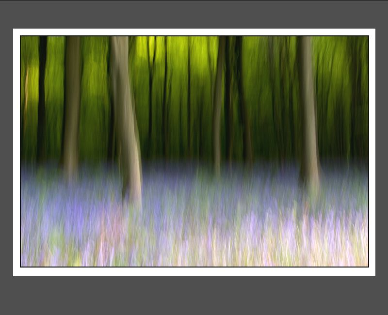 """Bluebell Wood"" image by Tony Flashman"