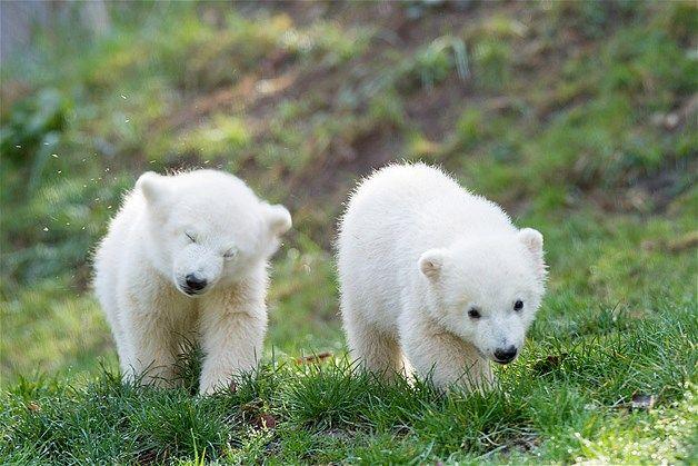 귀여운 아기곰
