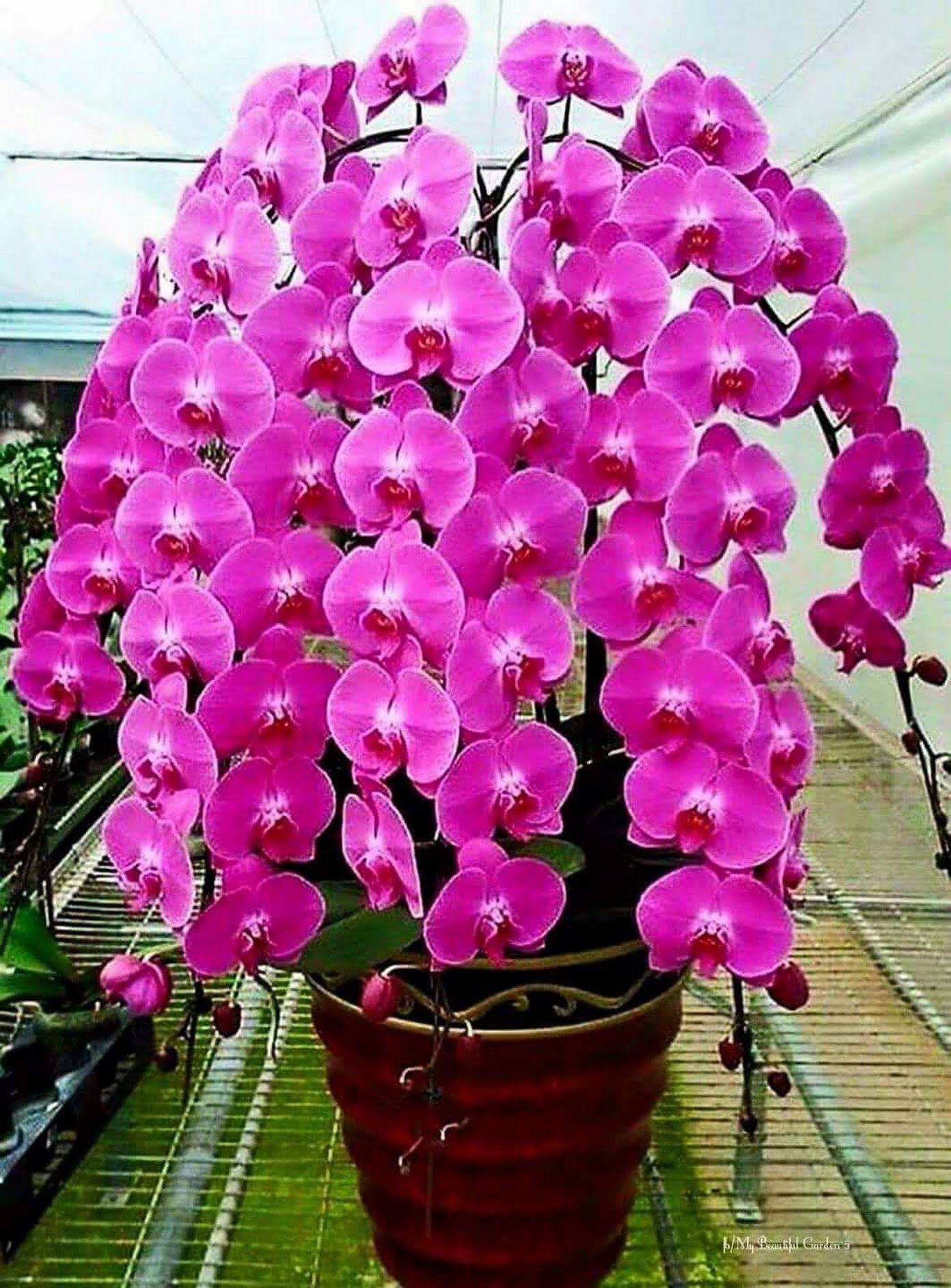 รปภาพ ดอกไม ตนไม pinterest orchid and flowers