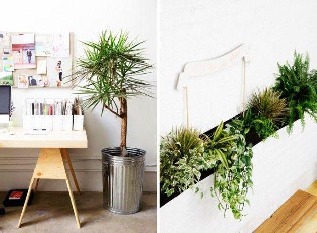Arredare con le piante cerca con google piante - Piante da interno purifica aria ...