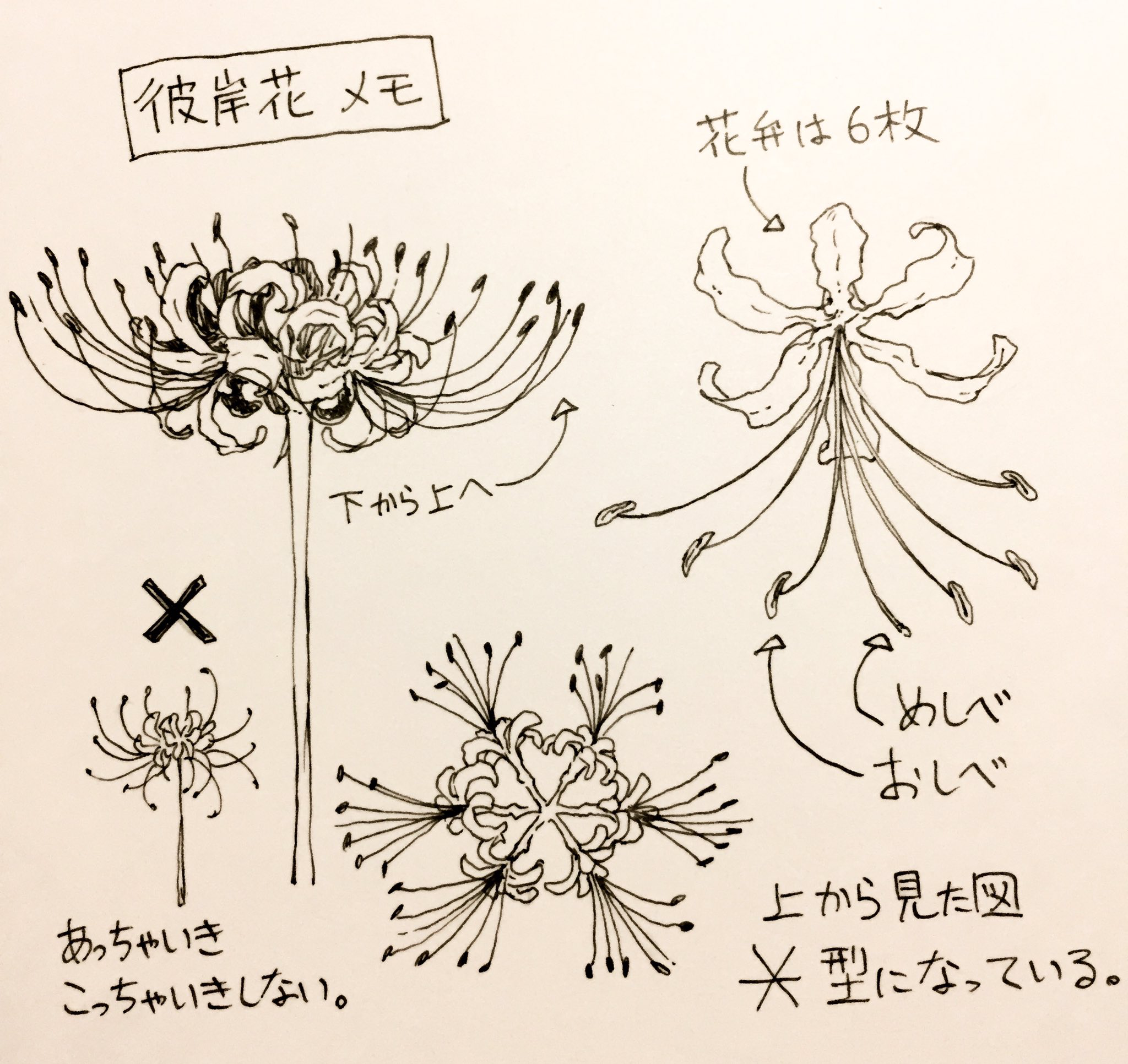 彼岸花 曼珠沙華 Lycoris Radiata 花のスケッチ 彼岸花 イラスト 花の描画チュートリアル
