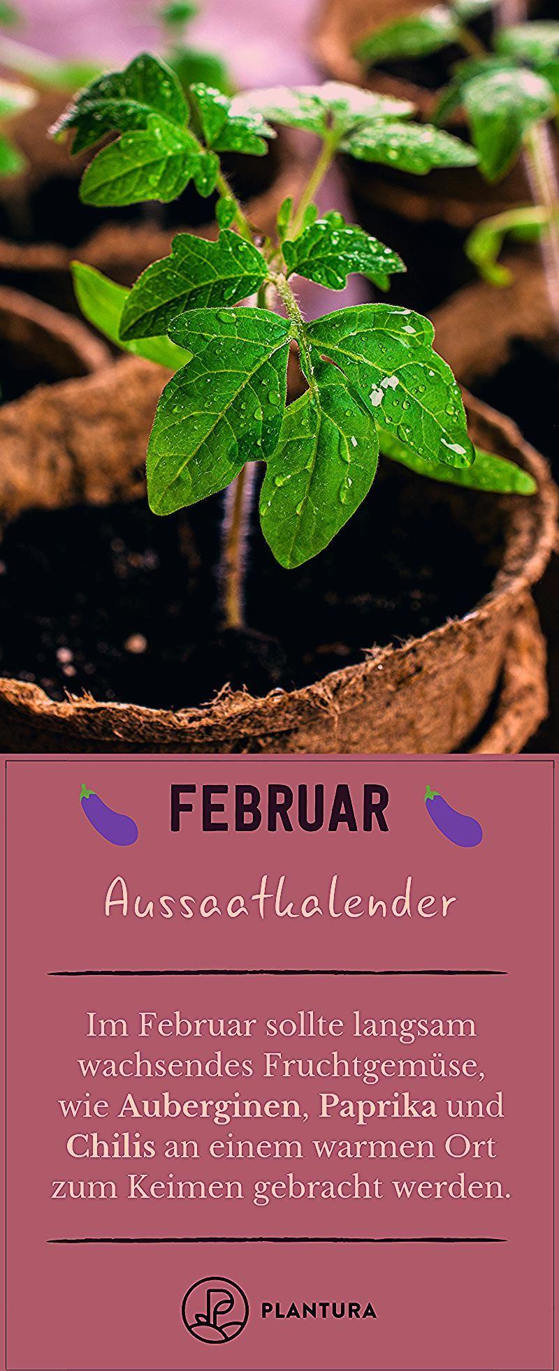 Photo of Aussaatkalender: Wann wird was ausgesät? – Plantura