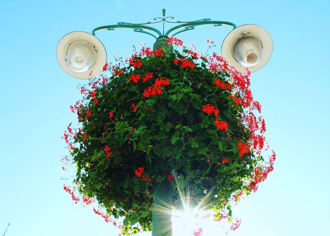 Geranien Blumen Flowers Flowerstagram Colours Farbe Himmel Lampe Natur Instagood Photography Photographer Sonne Ball Red Peppercorn Red