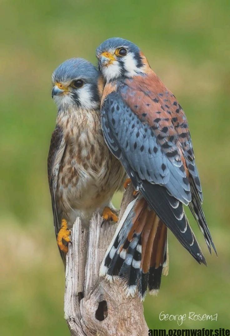 Wonderful Screen Birds Of Prey Wings Suggestions As Being A Birds