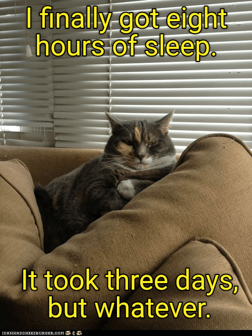 Such A Rough Life Cat And Dog Memes Silly Animals Funny Cat Memes