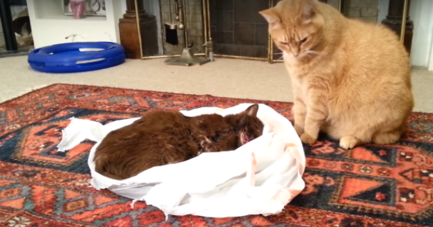 Verabschieden Sich Katzen Bevor Sie Sterben