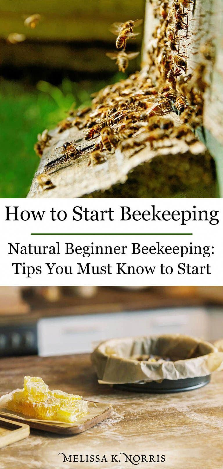 how to start backyard beekeeping for beginners # ...