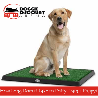 How Long Does It Take To Potty Train A Puppy Puppy Training Puppies Potty Training Puppy