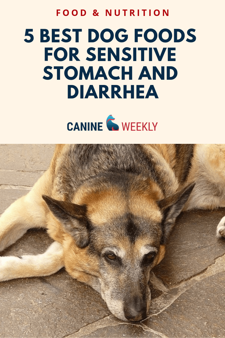 This Article Explains Some Of The Symptoms Of Sensitive Stomachs In Dogs And Describes The Characteristics Of Food Best Dog Food Dog Food Recipes Top Dog Foods