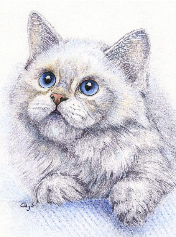 Рисуем красивые картинки животные