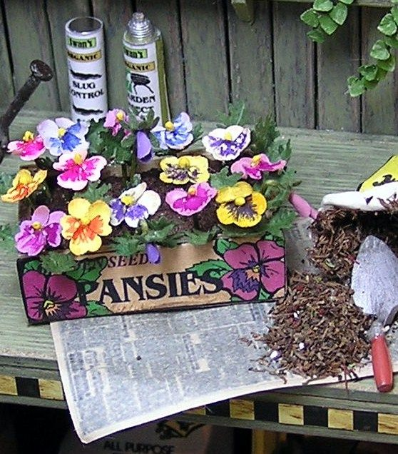 How To Pansies Planters Shelves Seed Packets Gardening Hat And Gloveore