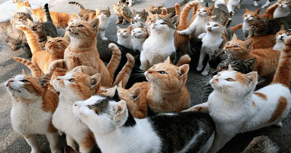 تفسير حلم القطط الكثيرة في الحلم ومعناها Cats Cat Lovers Cat Breeds
