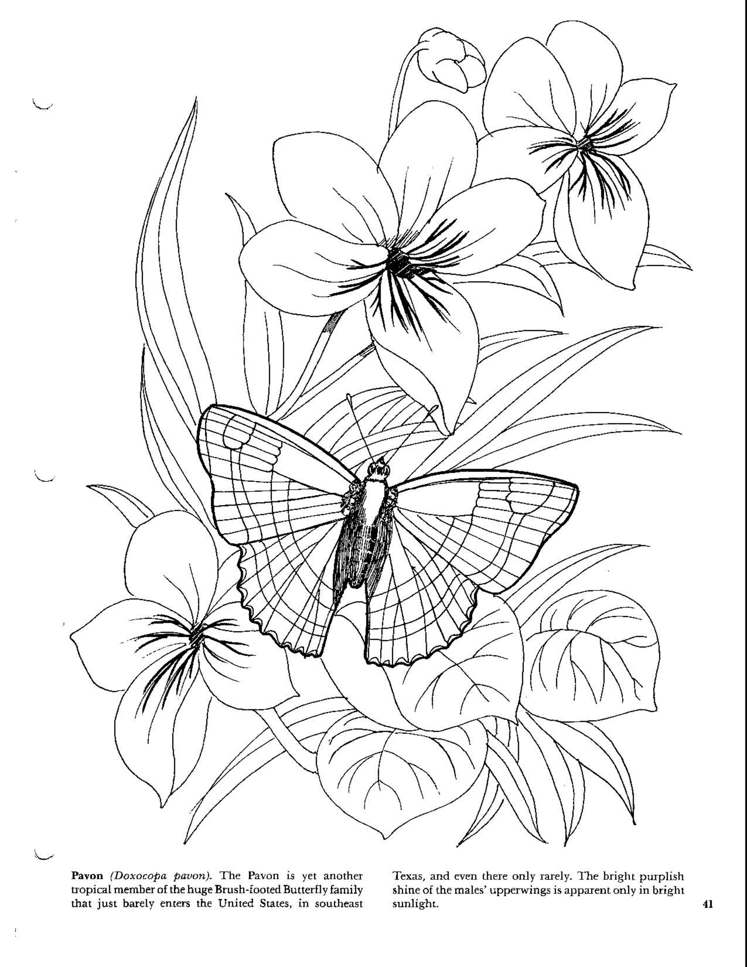 Butterfly Flower Coloring Pages Butterfly Coloring Page Flower